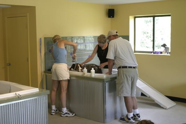 Spa shaggy shaggy pines dog park pamper your pet at our shaggy spa solutioingenieria Gallery