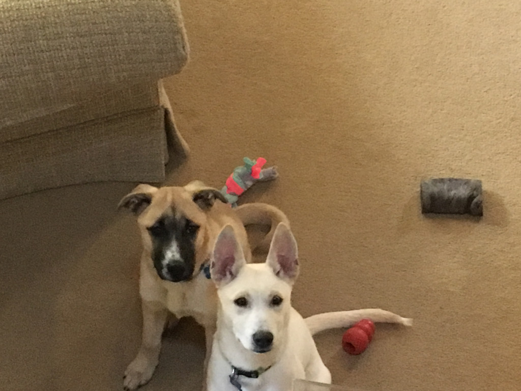 Harley and Scout